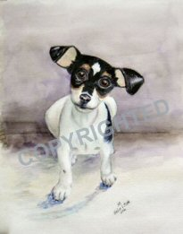 Water color painting of a Rat Terrier puppy named Kayto.