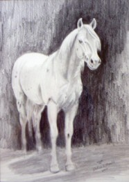 Graphite drawing of a stallion named Hootin Bullet
