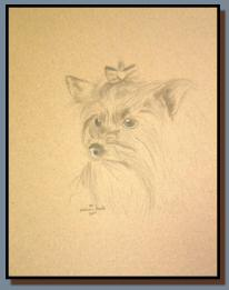 Portrait of a Yorkshire Terrier named Abigail, drawn in graphite.