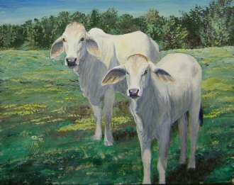 Acrylic painting of a Brahama Cow and Calf