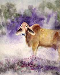 Watercolor painting of a brahma cow.
