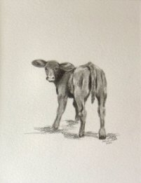 Graphite drawing of a calf.