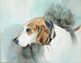 Watercolor painting of a Treeing Walker.